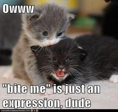 Dump A Day Beware Of Animals With Funny Captions - 28 Pics