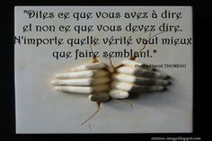 Une citation conseil vie ~ Citation en image : photo citation