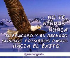 FRASES MOTIVADORAS... #frasesmotivadoras #frases #frasesmotivacionales #motivacion #exito #buscalogratis