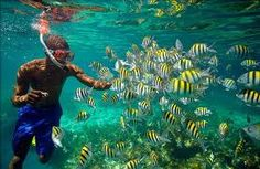 *Bob Marley* Jamaica, his cradle, his home island, his yard, and the birthplace of reggae.     Diving, Montego Bay. More fantastic pictures and videos of *Bob Marley* on: https://de.pinterest.com/ReggaeHeart/