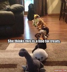 Funny pictures about Waiting In Line For That Treat. Oh, and cool pics about Waiting In Line For That Treat. Also, Waiting In Line For That Treat photos. Funny Dog Memes, Funny Animal Memes, Cute Funny Animals, Funny Animal Pictures, Funny Cute, The Funny, Funny Dogs, Animal Humor, Memes Humor