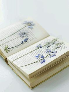 Loved pressing flowers in a book, you sometimes find them in old books in charity shops!