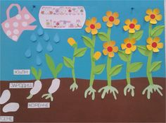 жизнен цикъл на растенията- проект на 4а клас