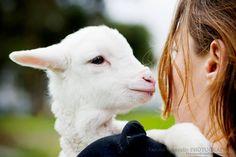 """Agneau. Tamara Kenneally photographie des animaux """"de ferme"""" en refuge"""
