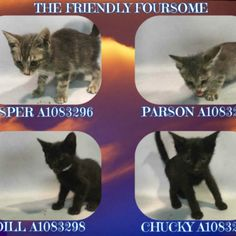 THE FRIENDLY FOURSOME - A1083296, A1083297, A1083298, A1083299