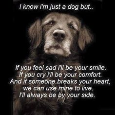★ WE ALL KNOW ★ A DOG ★ IS MORE THEN JUST A DOG!! ★