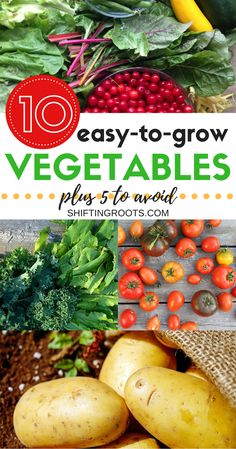 10 Easy to Grow Vegetables for Your First Garden, Plus 5 You'll Want to Avoid Planting a garden for the first time can be both exciting and terrifying. I've compiled 10 vegetables that are easy to grow for the beginner gardener, plus 5 you'll want to avoi Hydroponic Gardening, Hydroponics, Container Gardening, Organic Gardening, Cold Climate Gardening, Organic Farming, Veg Garden, Edible Garden, Easy Garden