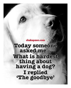 dog_hardestthingthegoodbye.jpg (680×842)