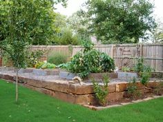 My raised vegetable garden. I have eight 4X6 foot beds. There are blueberry bushes in front, semi-dwarf fruit trees to the left, and a vigne...