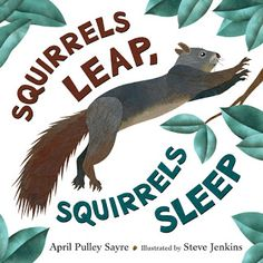 Watching it move up the trunk, it did not go to one of the many leafy apartments but to a hole in one of the trees.  Squirrels Leap, Squirrels Sleep (Henry Holt and Company, November 1, 2016) written by April Pulley Sayre with illustrations by Steve Jenkins is the fourth collaboration by this team combining poetry and art to deliver facts to readers.