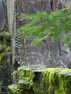 Minéral et végétal dans les Pans de Travassac - Corrèze