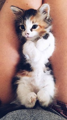 Cute Baby Cats, Cute Cats And Kittens, Cute Little Animals, Cute Funny Animals, Adorable Kittens, Kittens Cutest Baby, Cute Fluffy Kittens, Kittens Meowing, Baby Kitty