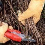 Découvrez comment entretenir le thym de votre jardin.