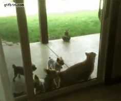 Ever wondered who left the back door open? Could have been your cat!