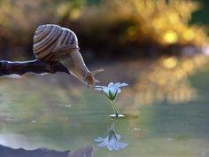 Amazing Close Up Photos of Snails Nature Animals, Animals And Pets, Funny Animals, Cute Animals, Wild Animals, Macro Photography, Animal Photography, Photography Jobs, Photography Classes