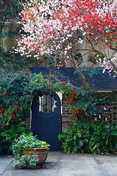 ♥♥ Courtyard Garden, Water Street, Charleston, SC Doug Hickok I love all the colors! Garden Doors, Garden Gates, Garden Entrance, My Secret Garden, Hidden Garden, Dream Garden, Blue Garden, Cacti Garden, Flowers Garden