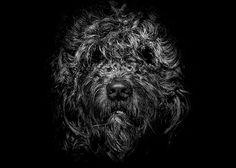 Ziggy Portrait No 1 on Behance