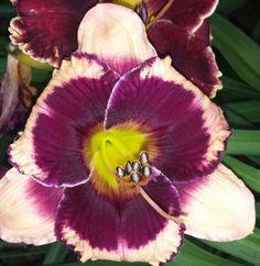 Beautiful eyed seedling