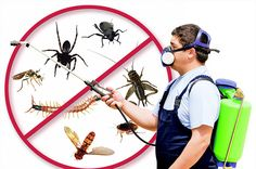 OCP Termite & Pest Control Clearwater Exterminator also has the largest variety of pest control supplies for ants, mice, cockroaches and bedbugs. Our experienced pest control Clearwater FL specialise in ridding your home of bedbugs, cockroaches and Pest Control Supplies, Pest Control Services, Fumigation Services, Best Pest Control, Bug Control, Control Issues, Mice Control, Termite Pest Control, Dubai
