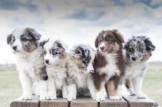 .i love how beautiful these pups are!!
