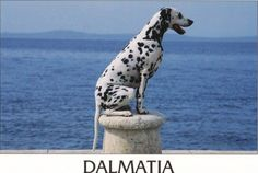 The Dalmatian Coast - I've been, but I've yet to take my dog.