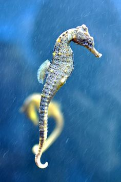 Seahorse by Theodore Scott