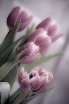 Tulips are one of my favorite spring flowers because they come in so many colors and can evoke so many emotions. Purple Tulips, Tulips Flowers, Spring Flowers, Tulips Garden, Planting Flowers, My Flower, Flower Art, Amazing Flowers, Beautiful Flowers