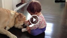 Nagy kutyák játszanak pici babákkal! Biztos feldobják a napod, mert nagyon viccesek!