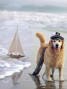 ChampCandice,  Ahoy, Captain 4/52, https://www.flickr.com/photos/champpugsly/8420056193/in/faves-virgonc/