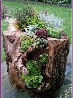 27 Fresh Ideas for Front Garden and Backyard Landscaping poserforum - Best Garden Decoration Trends Succulent Landscaping, Front Yard Landscaping, Landscaping Ideas, Hydroponic Gardening, Hydroponics, Vegetable Gardening, Water Plants, Garden Art, Landscape Design