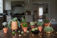 So many succulents, so little time.