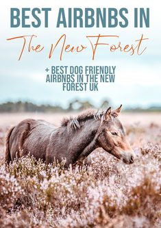 When heading to The New Forest National Park in Hampshire you want somewhere great to stay. These are the best Airbnbs in The New Forest. I also compiled a list of the best dog friendly places!
