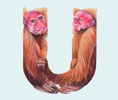 U • Animals in Alphabets by Casey Girard