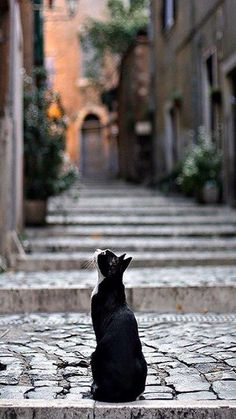 alley cat - love this photo Pretty Cats, Beautiful Cats, Crazy Cat Lady, Crazy Cats, Cool Cats, Animals And Pets, Cute Animals, Amor Animal, Gatos Cats