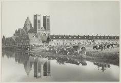 Haarlem 1947 Westergracht met kathedrale basiliek Sint Bavo met op de voorgrond nog weiland met koeien uit de goederenwagons bestemd voor het slachthuis (C. de Boer)