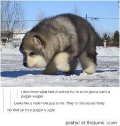 It's a puggle wuggle