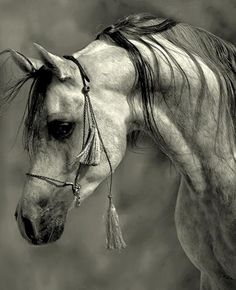 Amazing Photographs of Horses | 20+ pictures | #MostBeautifulPages