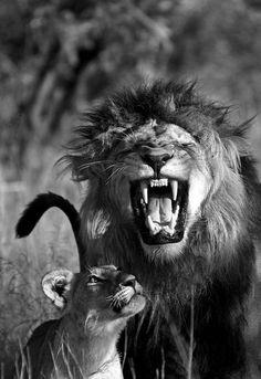 boy & girl lion