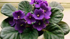 7 Plantas con flores durante todo el año - Rebel Without Applause Flores, Flowers, Begonia, Patio, Garden, Best Indoor Plants, Green, Jardin, Succulents
