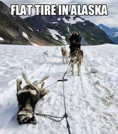 Flat Tire in Alaska - gotta love #huskyhumor