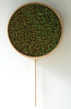 Clock filled with leaves that take a year to die.