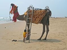 ''Try'' Photo by Pralay Sahu -- National Geographic Your Shot - I was walking on the Puri sea beach in India in an autumn noon. I watched a child trying to climb on a ladder to reach on a camel's back.