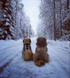 We love this  Ozzy  Teddy #we #love #snowydays #lovethis #beautiful #snow #dogs #furbabies #lovelyday #perfekt #dogshirt #skulls #blackandwhite #vackert #wintertime #nallarna #saknar #back #outforawalk #outdoors #doggywalk #winterland #nice #snötass #snö by sassacin #lacyandpaws