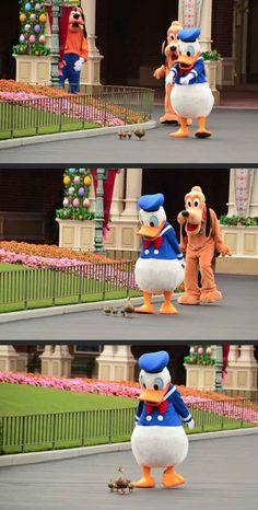 Y el día en que el Pato Donald se reunió con sus hermanos y sus hermanas : | Las 35 cosas más felices que hayan sucedido