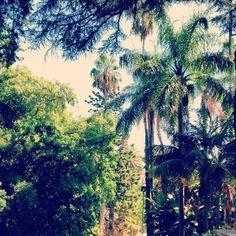 Jardim Botânico Lisbon Map, Plant Species, Exotic Plants, Four Square, Gardens, River, Outdoor, Outdoors, Outdoor Gardens