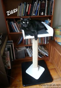Sisal Scratching Post   The Vertical Cat - Contemporary Cat Furniture, Trees, Shelves and Stairs   Create a room with No Corners