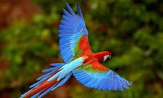Image result for tropical bird