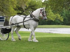 Classic Carriage Company RIP Misty. In our hearts always.