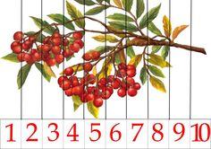 Autumn Activities For Kids, Puzzle, Education, Fruit, Games, Puzzles, Paper Envelopes, Plants, Flowers