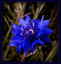 RHAPSODY IN BLUE... by Sugaree33-Art.deviantart.com on @deviantART